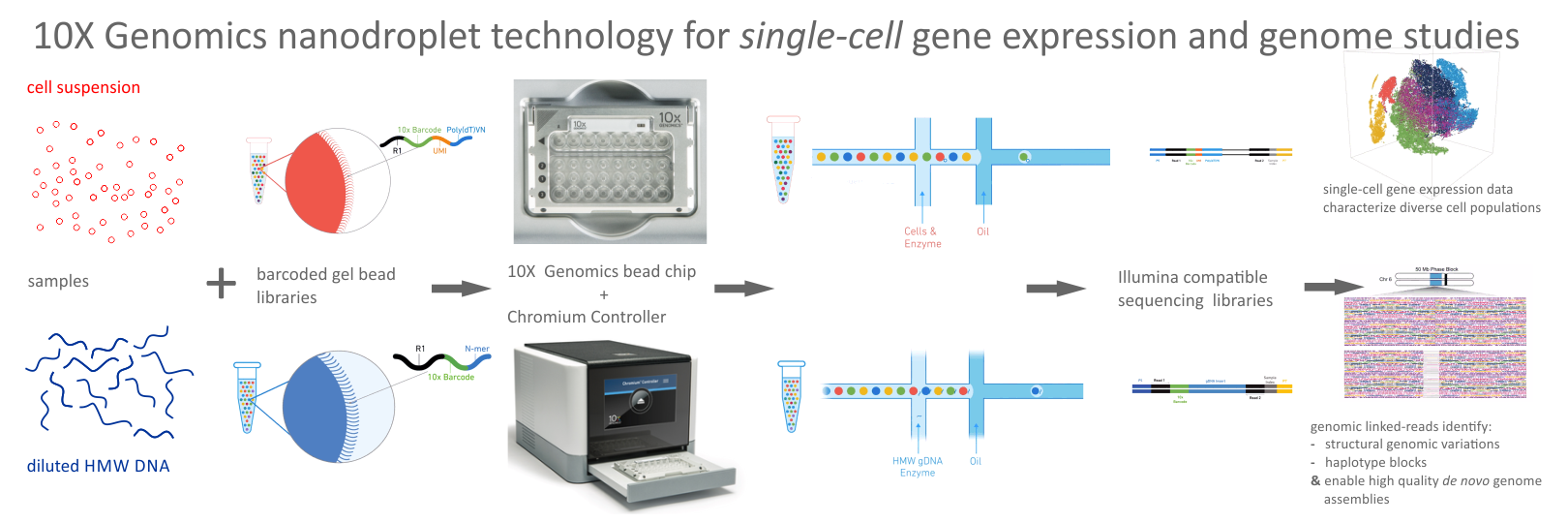 10X Genomics Chromium Single-Cell & Genome